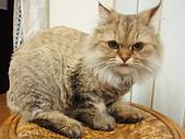 96.5.26貓咪新照片:P5260207