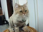 96.5.26貓咪新照片:P5260208