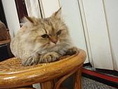 96.5.26貓咪新照片:P5260215
