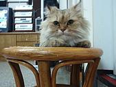 96.5.26貓咪新照片:P5260216