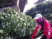 單車逍遙遊高雄至杉林:影像141.jpg