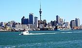紐西蘭鸕鶿 Pied Shags: