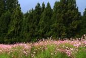 秋天的故事 - 福壽山:IMG_0481.jpg