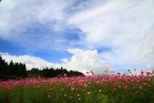 秋天的故事 - 福壽山:IMG_0446.jpg