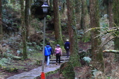 對高岳登山步道-- 阿里山走春:IMG_5222.JPG