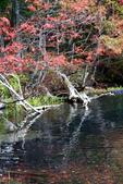 北海道 - 從釧路到阿寒:IMG_0090-.jpg