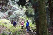 對高岳登山步道-- 阿里山走春:IMG_5223-.jpg
