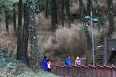 對高岳登山步道-- 阿里山走春:IMG_5246-.jpg