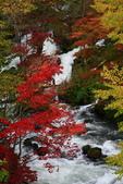 北海道 - 從釧路到阿寒:IMG_6633--c.jpg