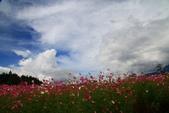 秋天的故事 - 福壽山:IMG_0448.jpg