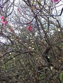 草山花見. 一 月:.       空留蒂滿枝,錯過了花期...... !