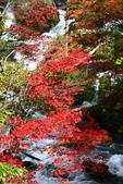 北海道 - 從釧路到阿寒:IMG_6637-.jpg