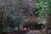 對高岳登山步道-- 阿里山走春:IMG_5245.JPG