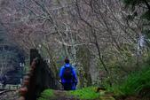 對高岳登山步道-- 阿里山走春:IMG_5253-.jpg