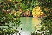 藏王健行:湖畔樹林實在太茂密了,只好不斷的找空隙對著秋湖拍照