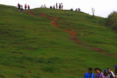 綠野香坡 - 擎天崗花訊:IMG_5658.JPG