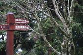 對高岳登山步道-- 阿里山走春:IMG_5230.JPG