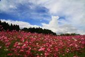 秋天的故事 - 福壽山:IMG_0450.jpg