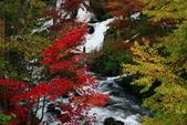 北海道 - 從釧路到阿寒:IMG_6632-.jpg