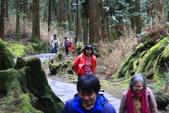 對高岳登山步道-- 阿里山走春:IMG_5221.JPG
