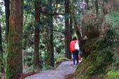 對高岳登山步道-- 阿里山走春:IMG_5262.JPG
