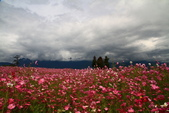 秋天的故事 - 福壽山:IMG_0456.jpg