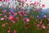 秋天的故事 - 福壽山:IMG_0463.jpg