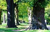 Christchurch 基督城 :IMG_5940.JPG