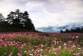秋天的故事 - 福壽山:IMG_0238.jpg