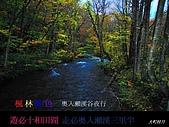 奧入瀨溪流.田澤湖: