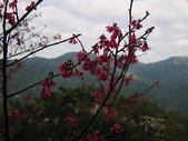 草山花見. 一 月: