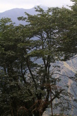 對高岳登山步道-- 阿里山走春:IMG_5244.JPG