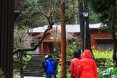 對高岳登山步道-- 阿里山走春:IMG_5213-5182x3455.jpg