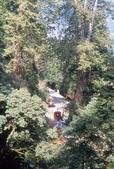 阿里山旅遊.阿里山森林遊樂區旅遊行程,阿里山日月潭二日遊:阿里山神木車站.jpg