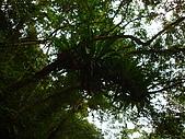 內洞森林遊樂區:DSC01133.JPG