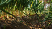 我們的開心農場: