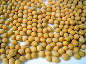 配菜の作品:催芽黃豆