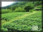 陽明山:陽明山