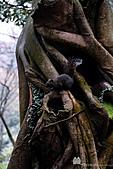 陽明山:松鼠