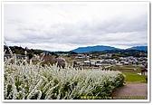 20090322奈良:飛鳥之高松塚古墳:DSC_1203_resize.jpg