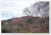 20090322奈良:竹林寺、中千本公園:DSC_1108_resize.jpg