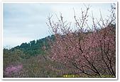 20090322奈良:竹林寺、中千本公園:DSC_1109_resize.jpg