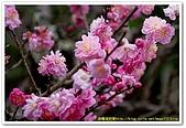 20090322奈良:竹林寺、中千本公園:DSC_1133_resize.jpg