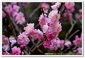 20090322奈良:竹林寺、中千本公園:DSC_1134_resize.jpg