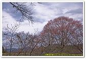 20090322奈良:竹林寺、中千本公園:DSC_1142_resize.jpg