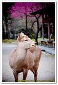 20090323奈良:片岡梅林:DSC_1322_resize.jpg