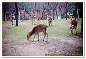 20090323奈良:片岡梅林:DSC_1338_resize.jpg