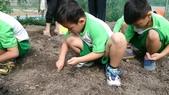 104一甲-有機菜園種黃豆:DSC_0018.JPG