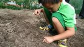 104一甲-有機菜園種黃豆:DSC_0017.JPG