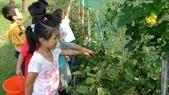 104一甲-有機菜園種黃豆:DSC_0058.JPG